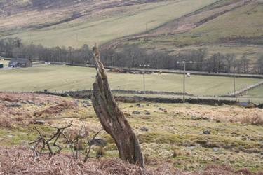 Weird looking tree stump?..
