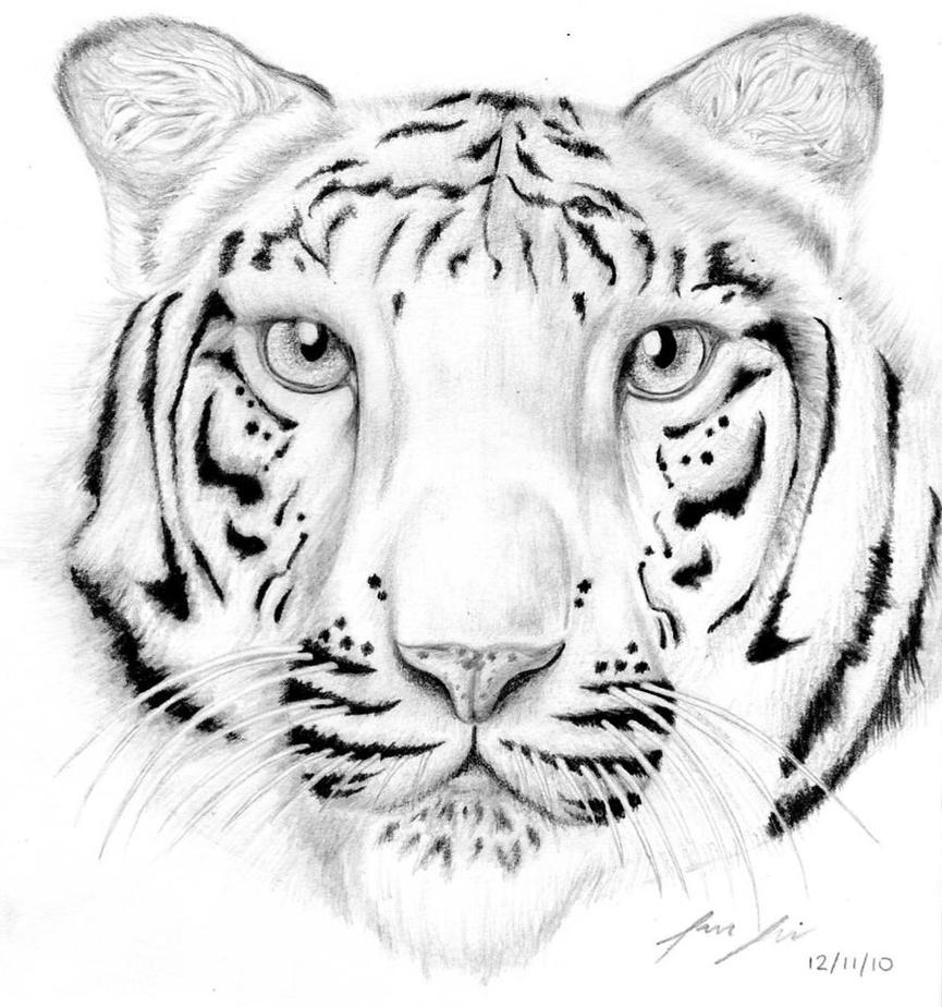 White tiger by yun hui lee on deviantart for White tiger coloring pages