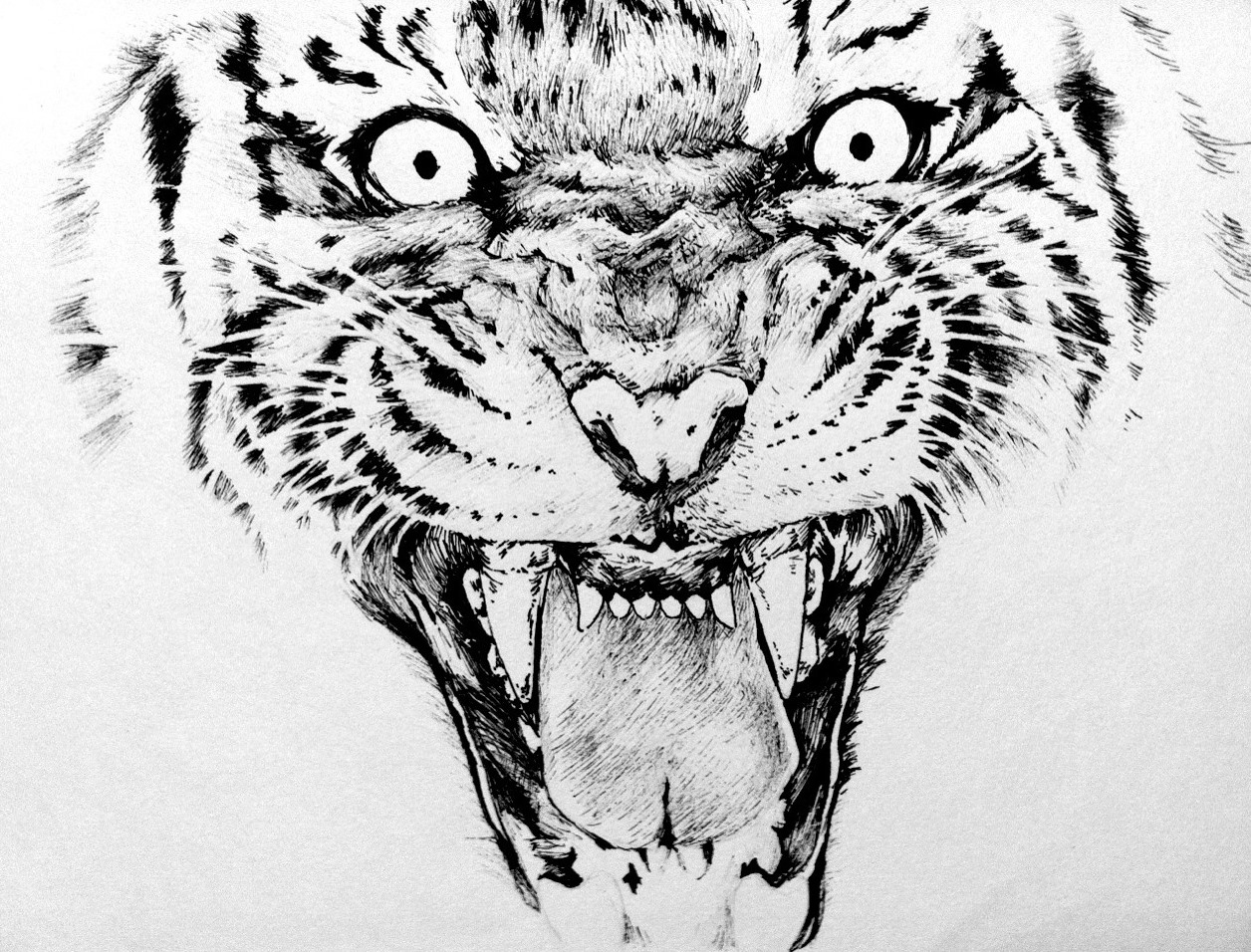 Line Drawing With Fineliner And Pencils : Tiger fineliner pen drawing by yun hui lee on deviantart