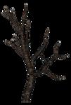 spooky tree 01