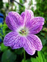 Beautiful Flower 1 by Lunalight