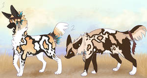 African Wild Dog adopts closed