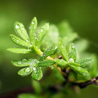 Rainy Spring by lemon66