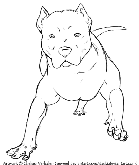 Pitbull Dog Drawings