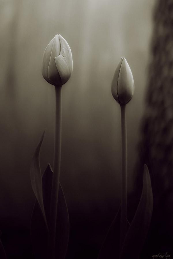 Secret Garden I by makowina