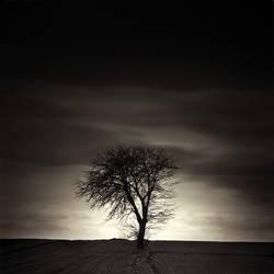The tree of life by makowina
