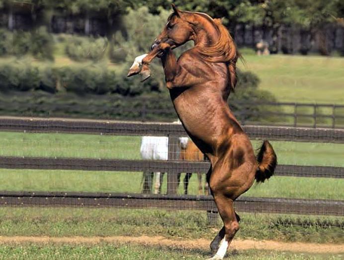 http://fc01.deviantart.net/fs70/f/2011/208/e/3/rearing_horse_stock_by_mrsjaredechelon-d41w6zs.jpg