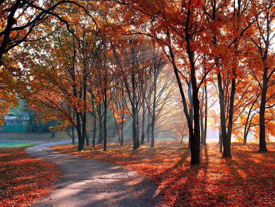 autumn morning 7 by alexandrdeviant