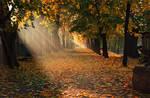 autumn morning 17