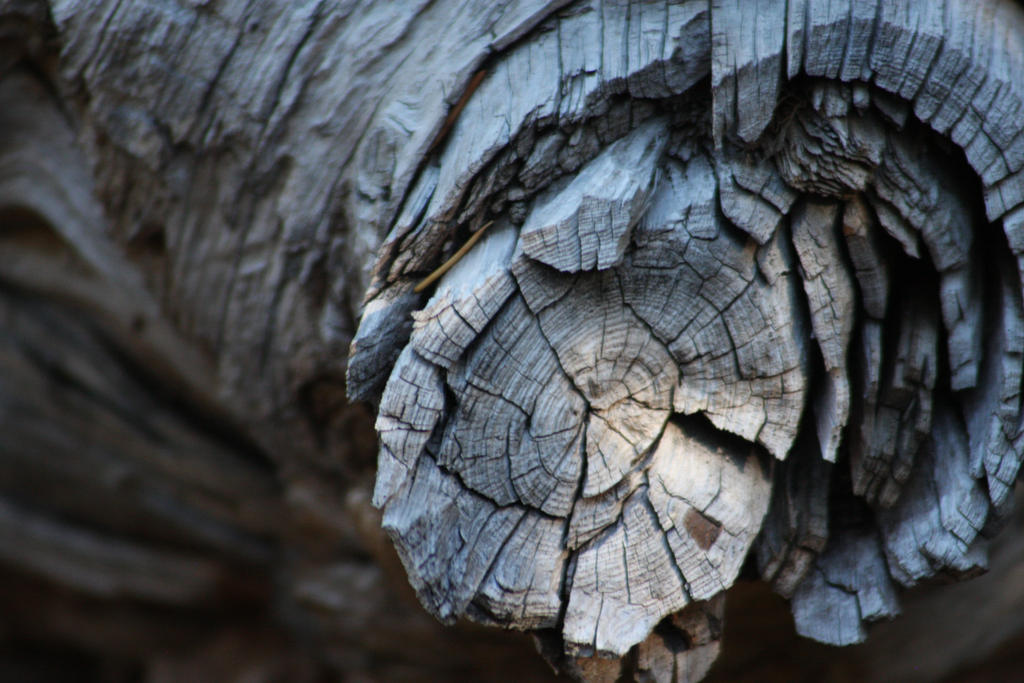 Old Wood by Quadrupedal