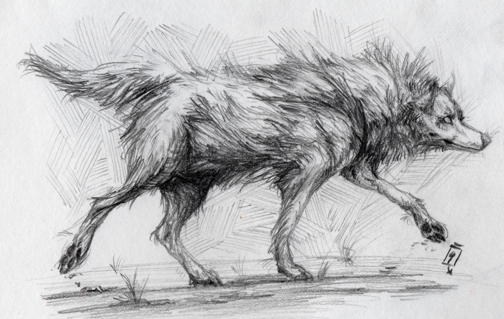 Pencil Wolf by Quadrupedal