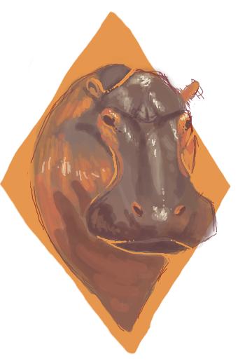 Hippopotamus by Quadrupedal