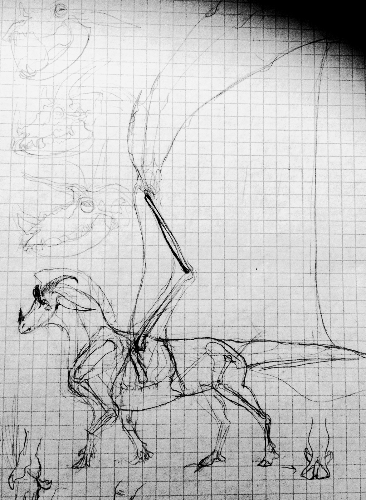 Dragon sketches by Quadrupedal