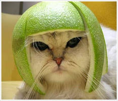 melon-head