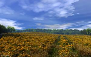 Golden field (v 2) by slepalex