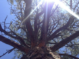 Sun Above The Tree by Zoluki