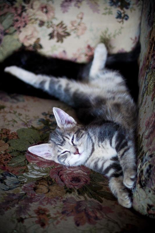 Kitty Nap by hasanaljanaby