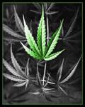 Classic Cannabis