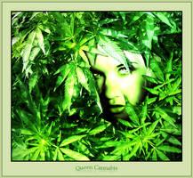 Queen Cannabis by Club-Marijuana