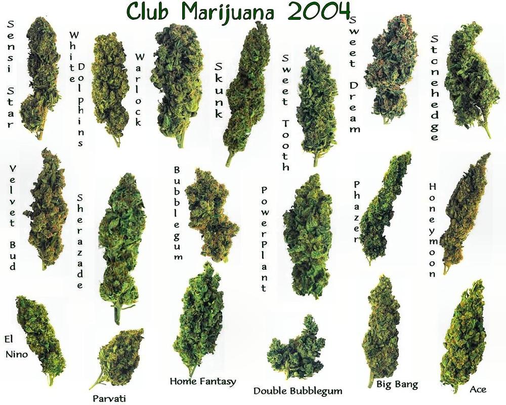 Club-Marijuana by puddlz by Club-Marijuana