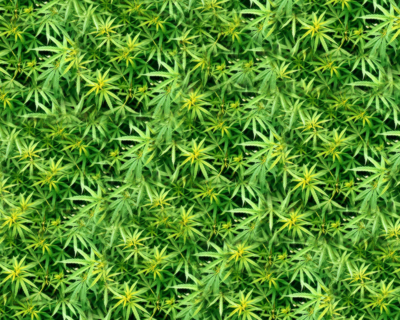 Dank wallpaper by club marijuana on deviantart