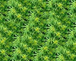 dank wallpaper by Club-Marijuana