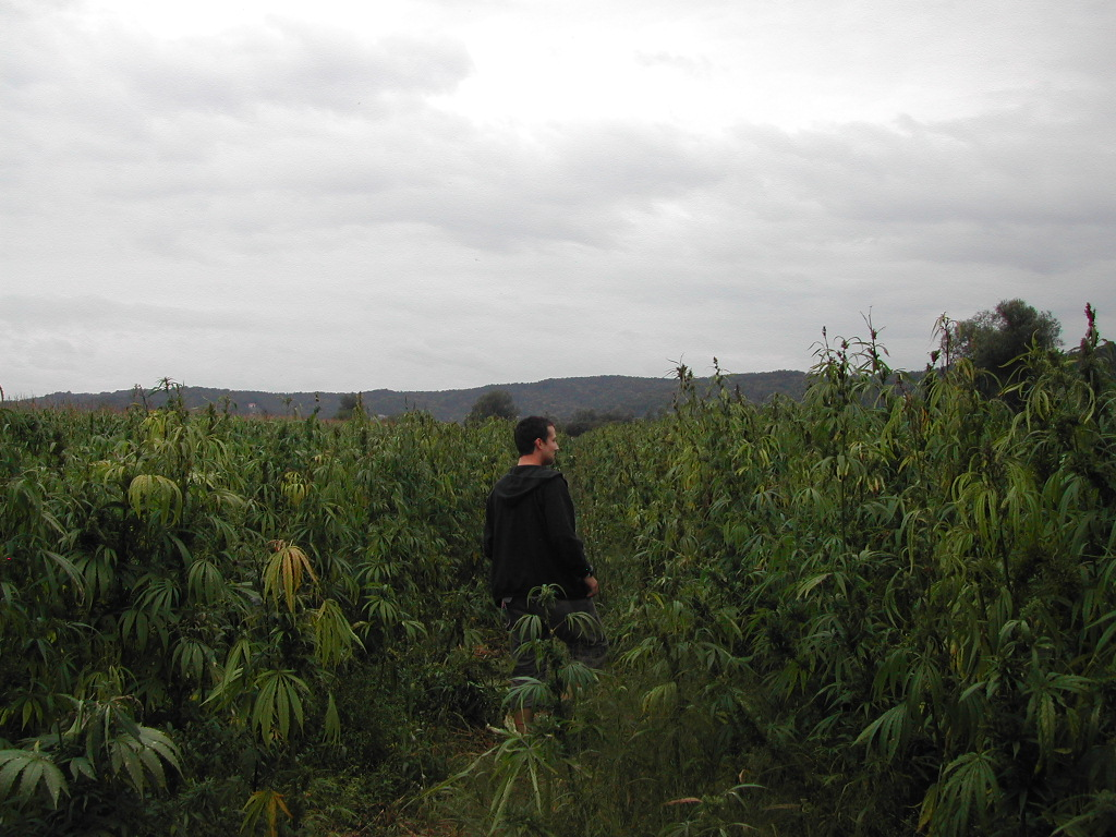 Lost in the Jungle of Jah