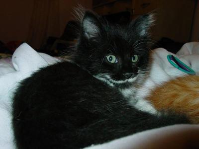 Sylvester - kitten by CassielCas