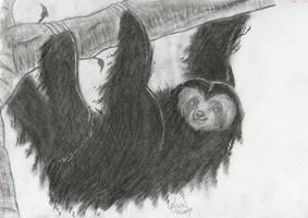 [Commission] Three-Toed Sloth