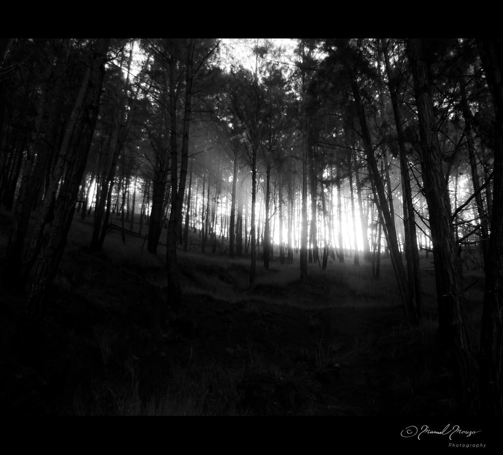 Foreverdark Wood Part III by Thrym982