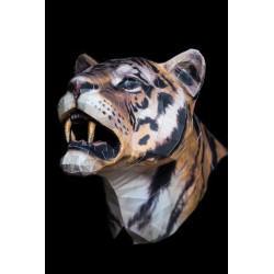 Tete-de-tigre-tiger-head