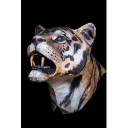 Tete-de-tigre-tiger-head by enigmael