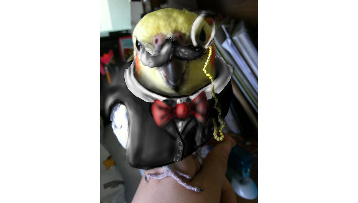 My bird Zara in a suit by kyndy101
