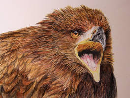 golden eagle with pastel