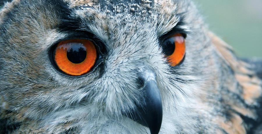 orange eyes by cola93