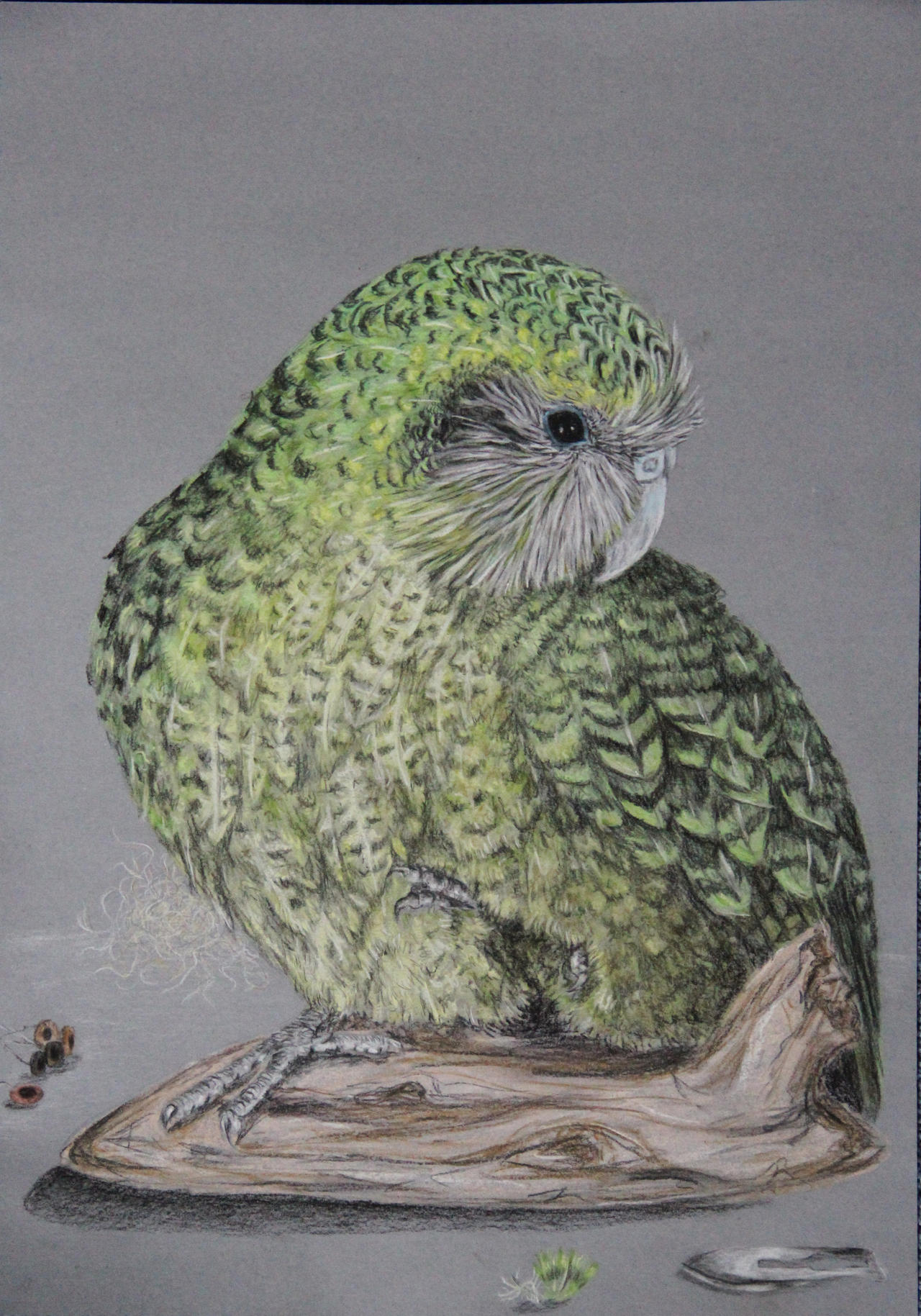 kakapo by cola93 on DeviantArt
