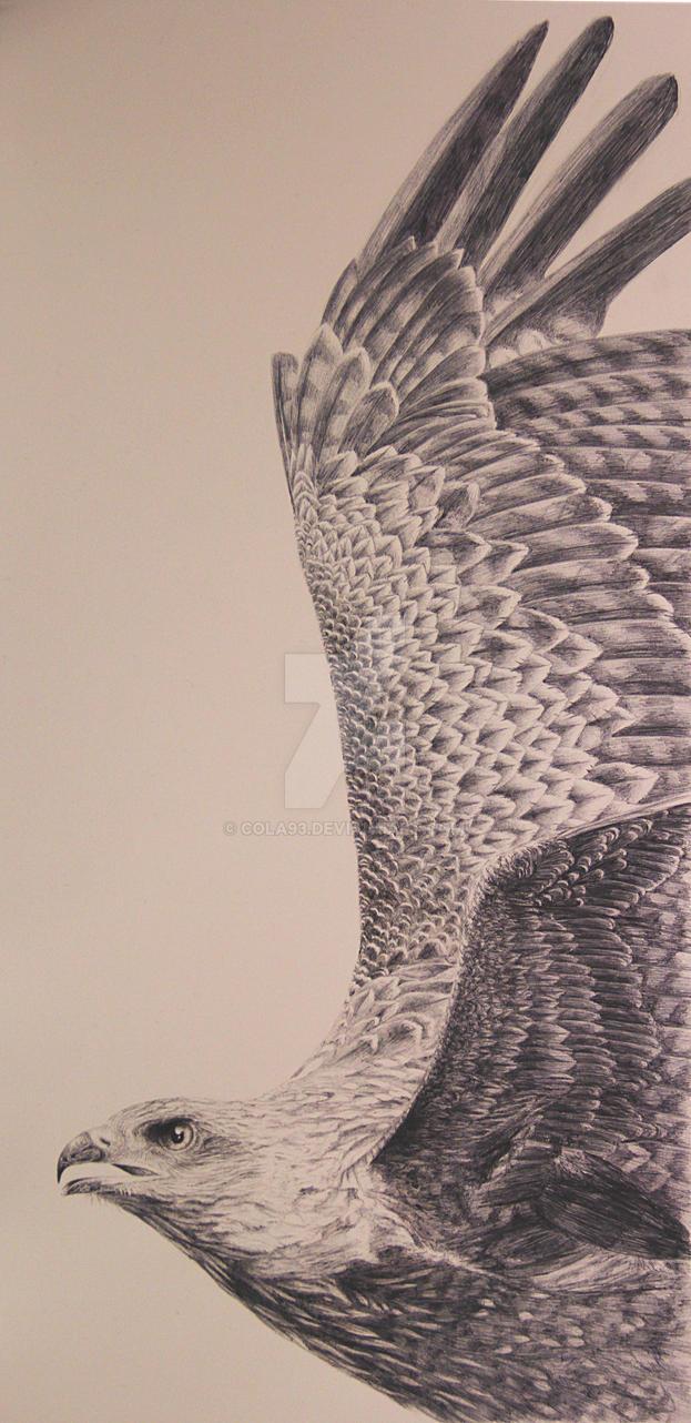 on Wings..black kite by cola93