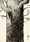 tree drawing 1