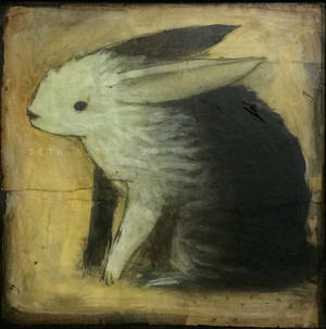 Rabbit in Late Light