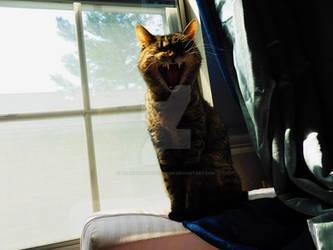 Nightmare Yawn