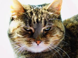 Feline Contempt