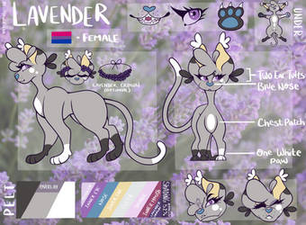 ~ Lavender Reference Sheet (Updated) ~ by BellFlowerss