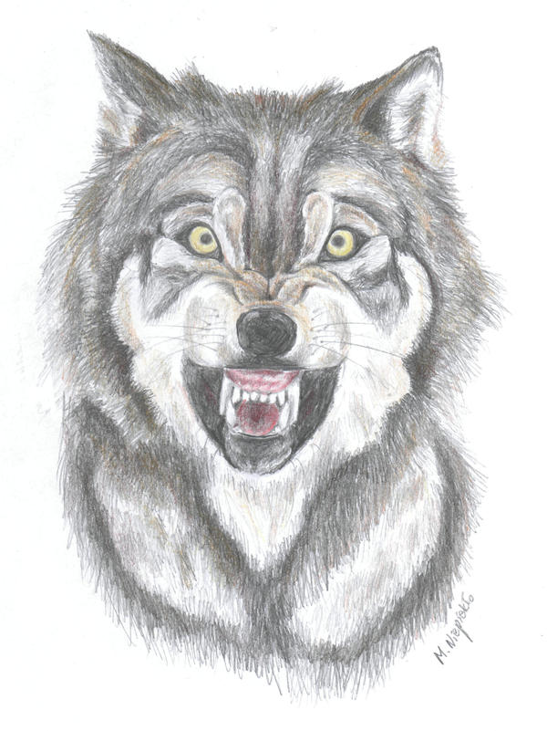 Realistic Drawings Of Wolves Growling growling wolf by Fuflo...