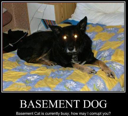 ceiling cat vs basement cat wallpaper basement cat 39 s recruitment3