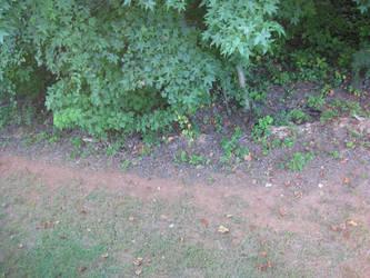 Backyard Path by GatesOfGold