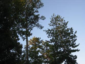 Georgian Trees by GatesOfGold