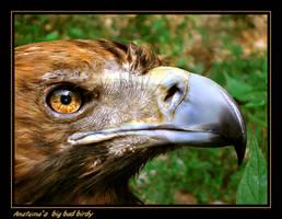 big bad birdy closeup by AnatemaDevice