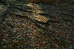 autumn mountain roots leaves 2