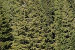 woods texture 1