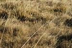 yellow autumn mountain grass 1